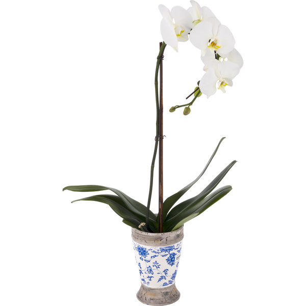 Giant Orchid in Blue Chintz 5 Inch