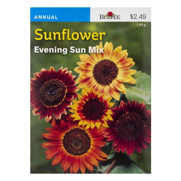 Burpee Annual Sunflower Evening Sun Mix